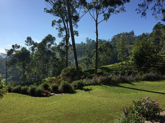 Landscape - Ceylon Tea Trails - Relais & Chateaux Photo
