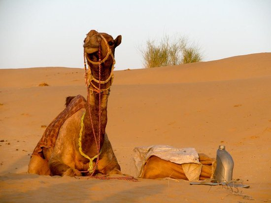 Thaar Jaisalmer