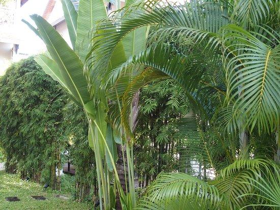 Ansara Hotel: giardino