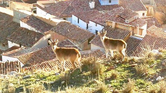 Castellote, Spanyol: IMG_20170107_203130_large.jpg