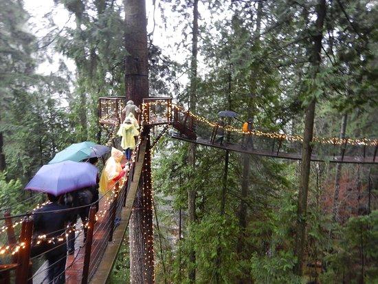 Kuzey Vancouver, Kanada: 大木間を吊橋で繋いだ空中散歩路