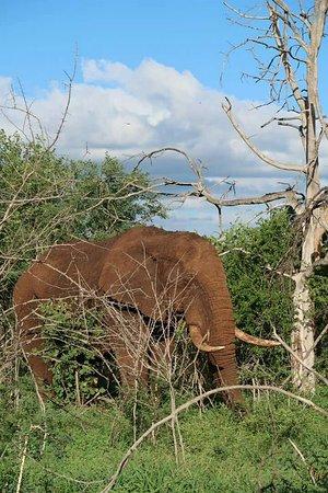 Mkuze, Sør-Afrika: FB_IMG_1483871819206_large.jpg