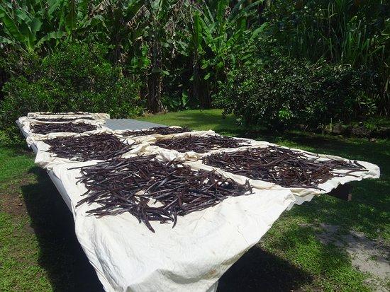 Patio, Polinesia Francesa: Vanilla drying under the polynesian sun.