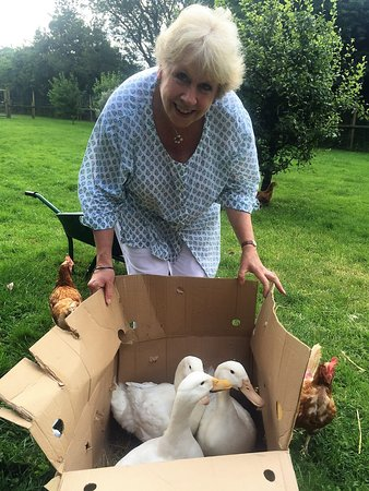 Little Compton, UK: New friends joining Diana Duck and her Supremes down yonder...more eggs for guests!