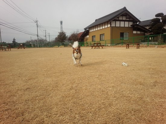 Chikusei, ญี่ปุ่น: DSC_5643_large.jpg