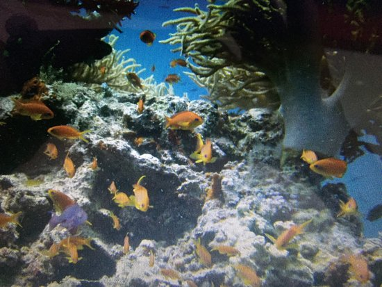 Rakiraki, Fiji: Soft coral and Anthias seen on a dive with this dive company