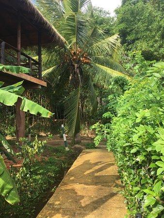 Как в джунглях