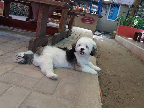 Lazy Dog Bed & Breakfast: received_1559218617440420_large.jpg