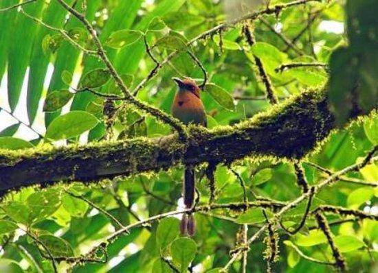 Braulio Carrillo National Park, Costa Rica: photo1.jpg