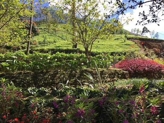 Dickoya, Sri Lanka: Wonderful gardens