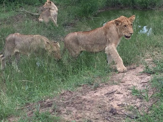 Shindzela Tented Safari Camp: Some of the locals!