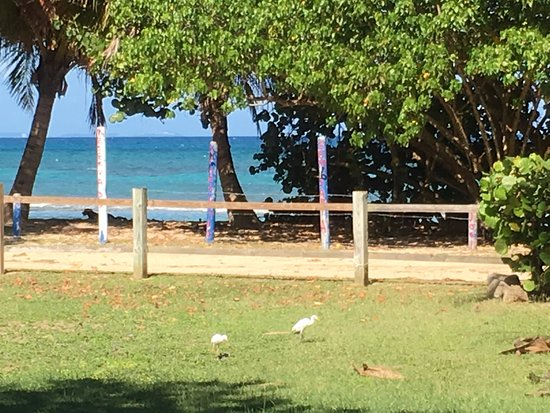 Ababor Suites: from our porch (those are visiting cattle egrets)
