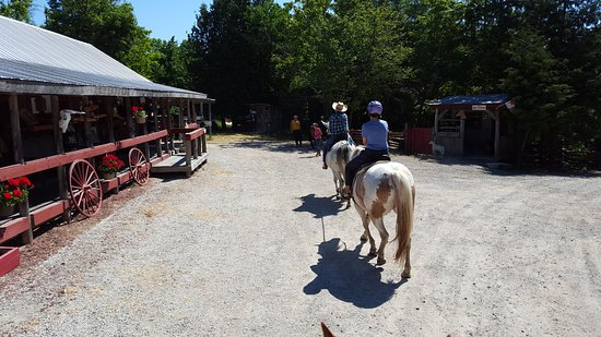 Tehkummah, Canada: Mule riding at the ranch
