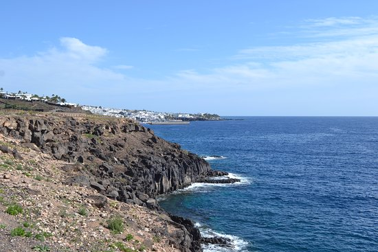 euphorbia - Picture of Walk from Puerto del Carmen to Puerto Calero, Puerto D...