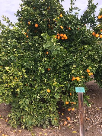 California Citrus State Historic Park : photo6.jpg