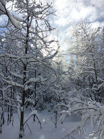 Maynooth, Canada: views as we sledded