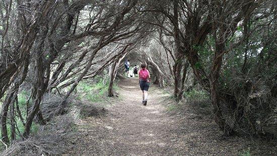 Cape Schanck, Australia: Part of the walking trail