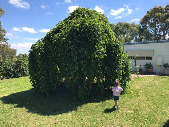 Kingscote, Austrália: photo1.jpg