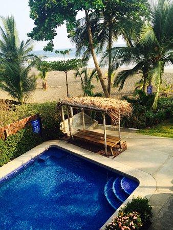 few of the many iguanas picture of backyard hotel playa hermosa
