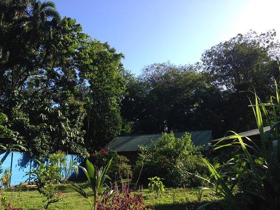 Cocles, Costa Rica: Jeder Bungalow versteckt sich hinter viel Grün, rundherum Faultiere, Vögel, Leguane