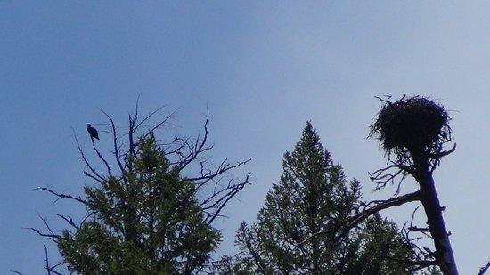 Eagle's Nest Above Burney Falls