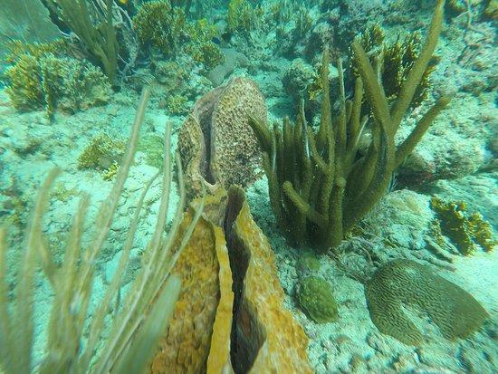 Northeast Coast, Tobago: photo1.jpg