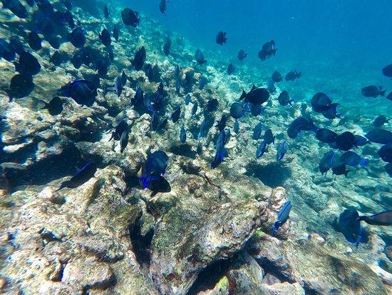 Northeast Coast, Tobago: photo2.jpg