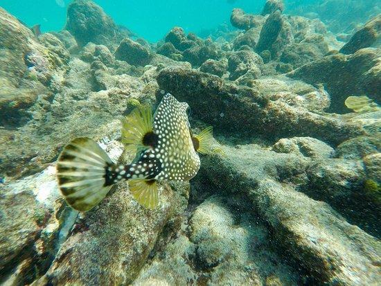 Northeast Coast, Tobago: photo4.jpg