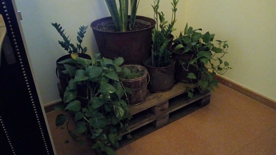 Ruby Sofie Hotel Vienna: En la recepción, se monta un pequeño jardín.