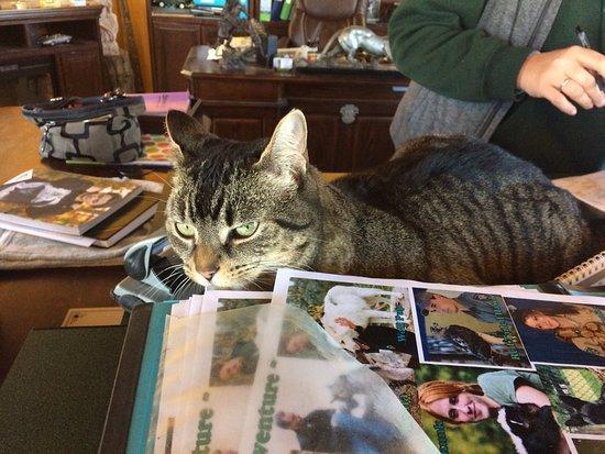 Orono, แคนาดา: Jungle Cat World Wildlife Park