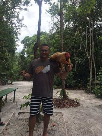 Amazon Ecopark Jungle Lodge: IMG-20170108-WA0004_large.jpg