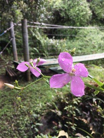 Hawi, HI: bridge on hike