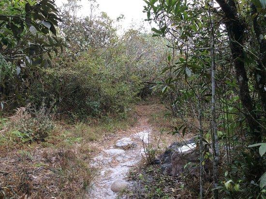 Phu Ruea, Thailand: One of the trails.