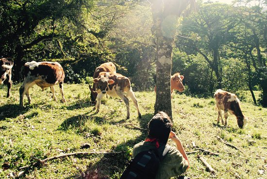 Terra Viva: me and the cows