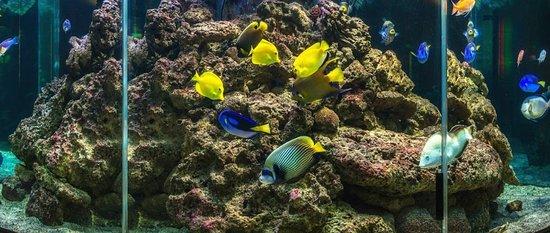 Veldhoven, Países Bajos: Mooie Zee aquairium