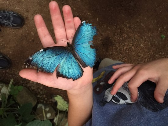 El Castillo, Costa Rica: Super tame butterflies at Butterfly Conservatory!