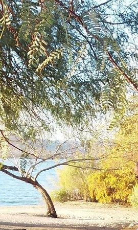 Lake Havasu State Park: Tree and Lake Havasu from Campsite 4