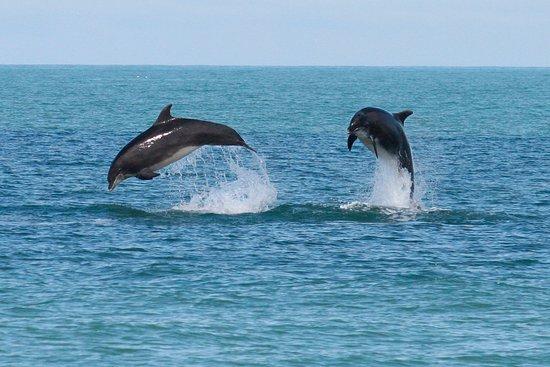 Blue Whales Mirissa