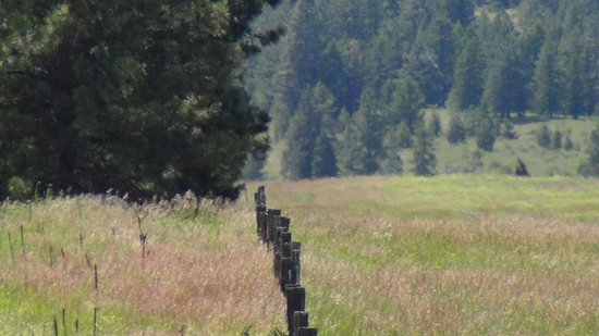 Oroville, WA: the fence that separates the USA from Canada near Old Molson/Sidley