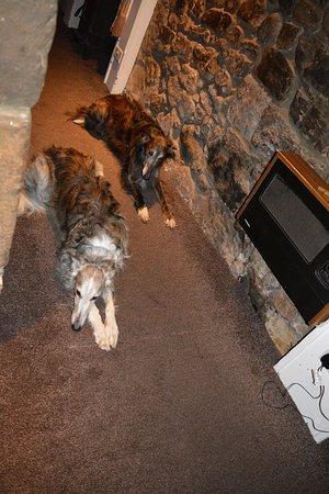 Glendevon, UK: dogs welcome