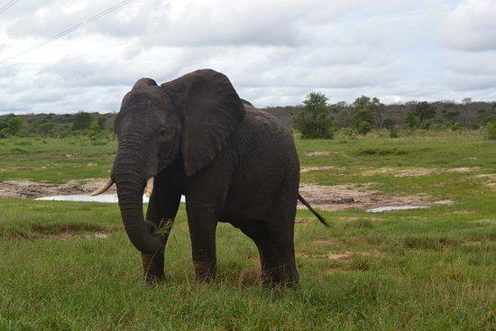 Hwange Safari Lodge: safari drive close up with ele