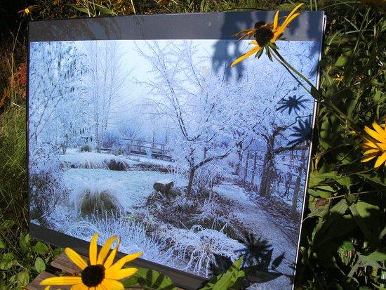 Jardin remarquable plobsheim 2018 ce qu 39 il faut for Jardin remarquable