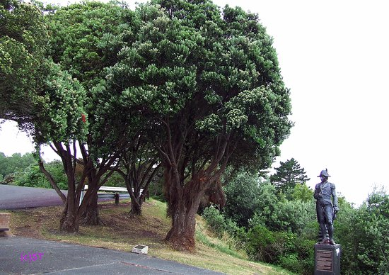 Gisborne, نيوزيلندا: Lady Diana Pohutukawa and James Cook Statue
