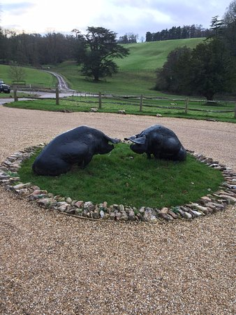 """Honiton, UK: Well it is called """"The Pig"""" but a quirky touch"""