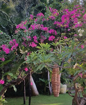 Villa Massilia Bali: Jardin superbe