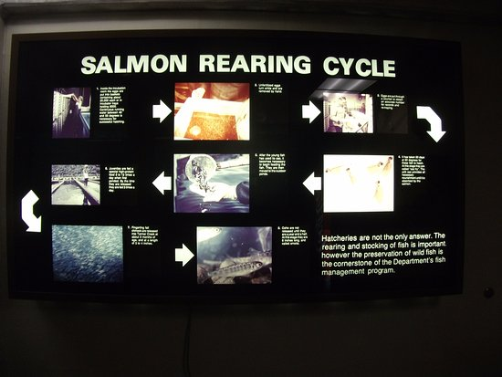 Cascade Locks, Oregón: Salmon information display