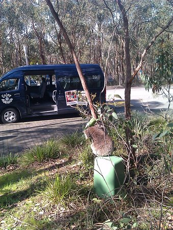Adelaide Hills, Australia: Look my ride has arrived at Mt Lofty