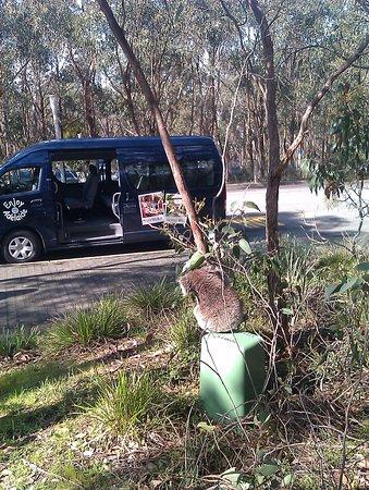 แอดิเลดฮิลล์, ออสเตรเลีย: Look my ride has arrived at Mt Lofty