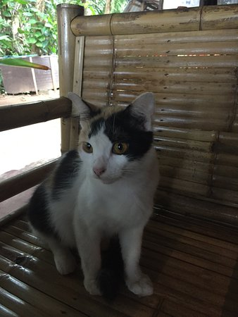 Sai Thai, Thailand: Tiger the cat