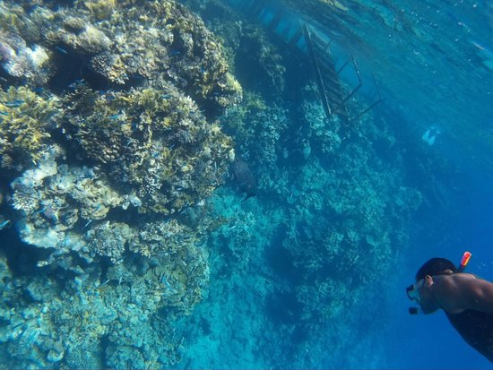 Falcon Hills Hotel: Коралловый пляж